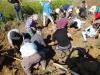 Eifrige-Fossilien-Suche